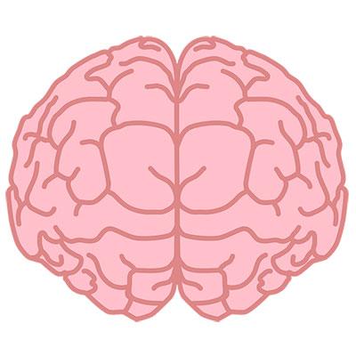 Neuriva VS Prevagen